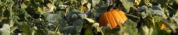 Beyond Easy Pumpkin Purée