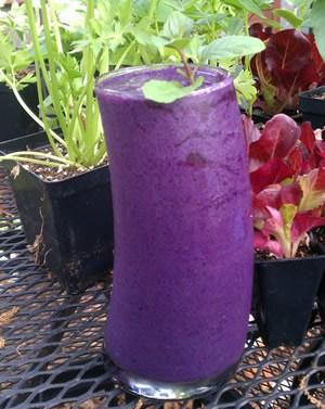 Blueberry Green Tea Cheap-o-chino
