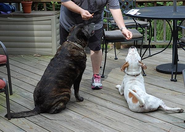 VeganCuts Dog Lovers Box Giveaway!