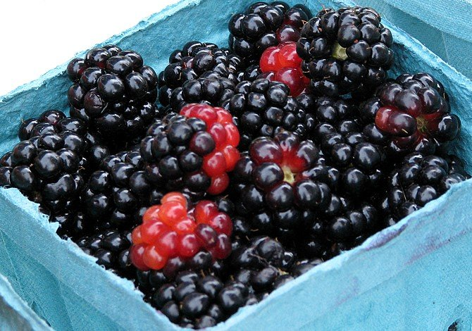 DIY Fresh Blackberry Syrup