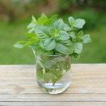 Mint Infused Vodka