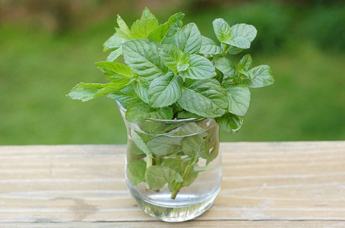 DIY Mint Infused Vodka