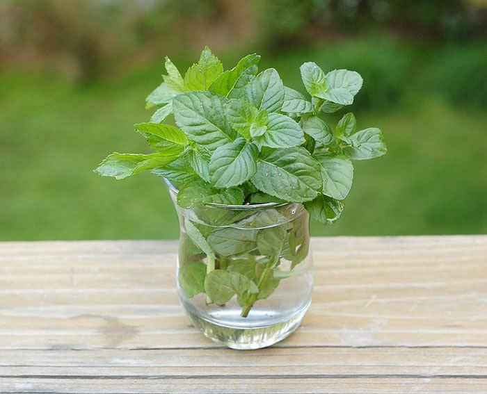 DIY Mint Infused Vodka