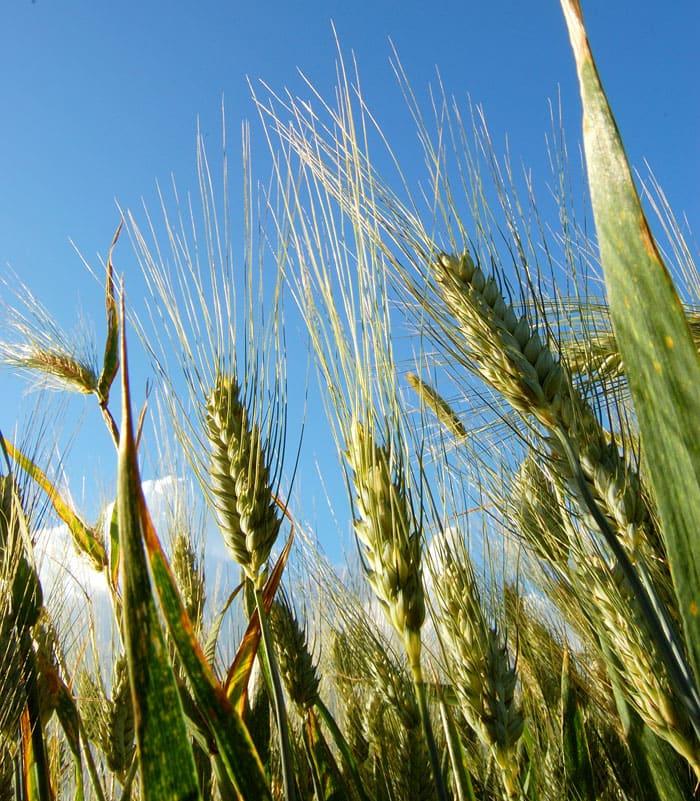 Kitchen Basics: Building a Vegan Pantry with Grains