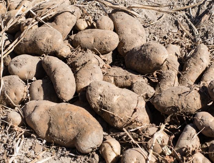 2015 Potato Harvest Tour