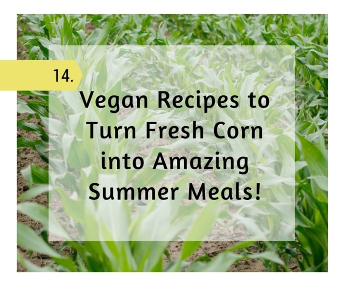 14 Vegan Recipes to Turn Fresh Corn into Amazing Summer Meals!